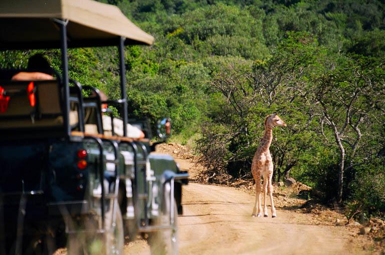 África do Sul Especial de Réveillon