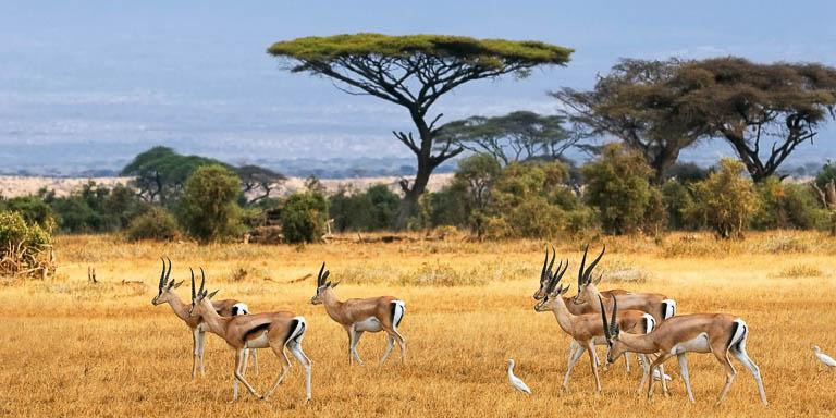 Esplendores da África