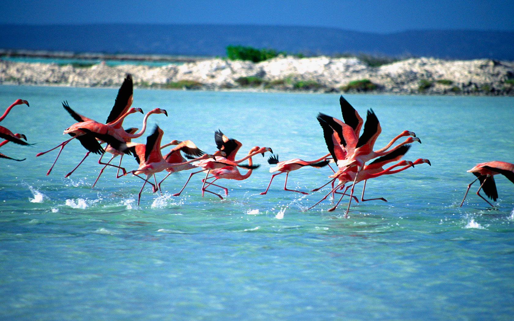 Joias do Mar do Caribe - Royal Princess