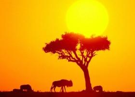 A Grandiosidade do Mundo Africano - Slow África