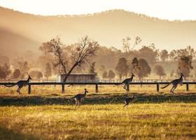 Paisagens e vinhos na Austrália
