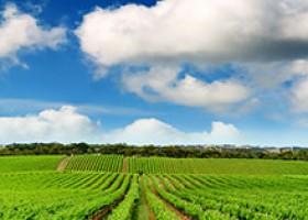 Rota do Vinho na Nova Zelândia
